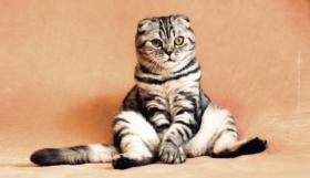 Urlaub mit Tieren: Ferienwohnung, Camping & Meer mit Hund, Katze & Co.