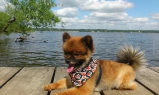 Grundausstattung Welpe & Hund: 6 Must Haves! Futter, Napf, Leine, Halsband, Decke, … – Checkliste