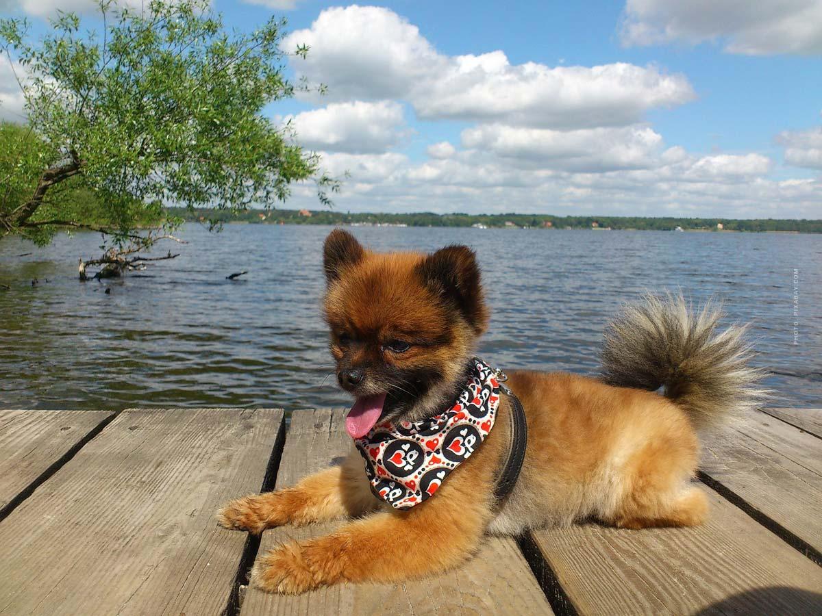 Grundausstattung Welpe & Hund: 6 Must Haves! Futter, Napf, Leine, Halsband, Decke, ... - Checkliste