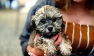 Hund kaufen: Welpe zieht ein! Gassi gehen, alleine bleiben & Co. – Deine erste Woche