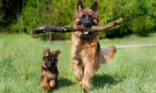 Hundefell & Hunderassen: Unterwolle, Unterschiede und perfekte Pflege – Beliebte Rassen